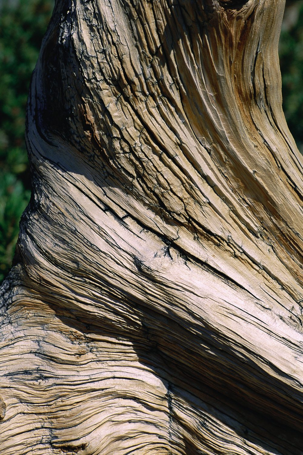 The Adobe Image Library ©1998 Adobe Systems Incorporated  Eroded wood, close-up